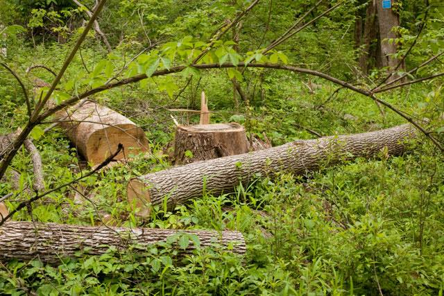 madera seca 2